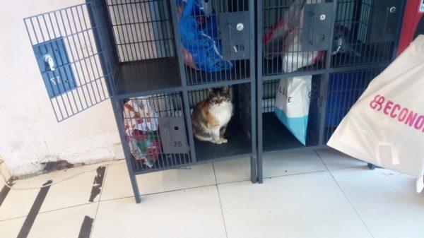котик в супермаркете