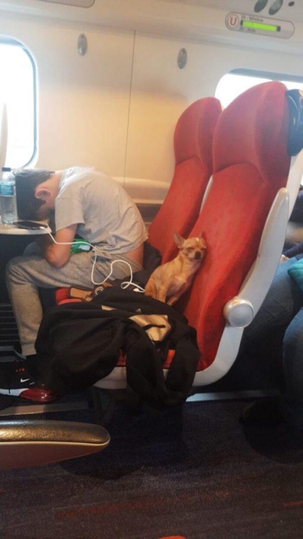 пес в самолете устал