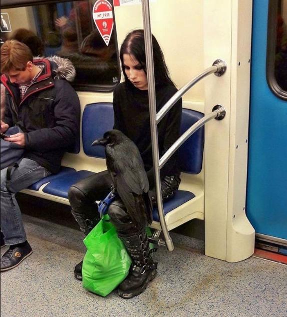 ворон в метро фото