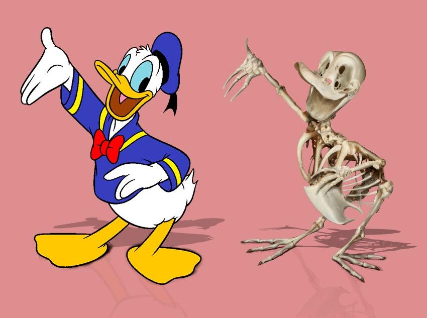 скелет дональда дака