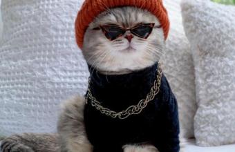 фото крутого кота