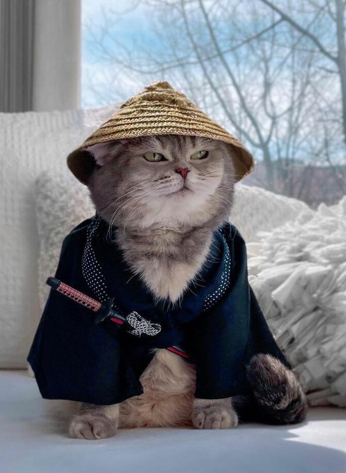 кот бенсон фото