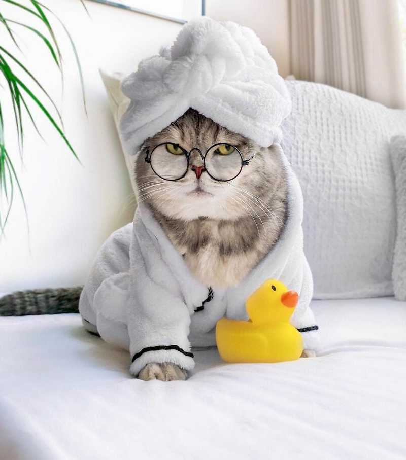 кот в халате фото