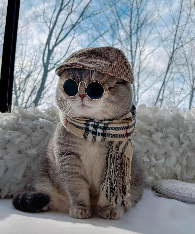 стильный кот фото