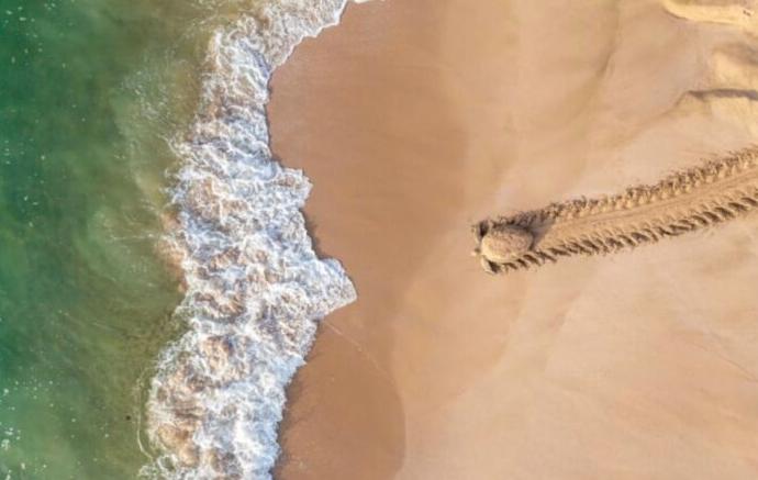 черепаха ползет к морю