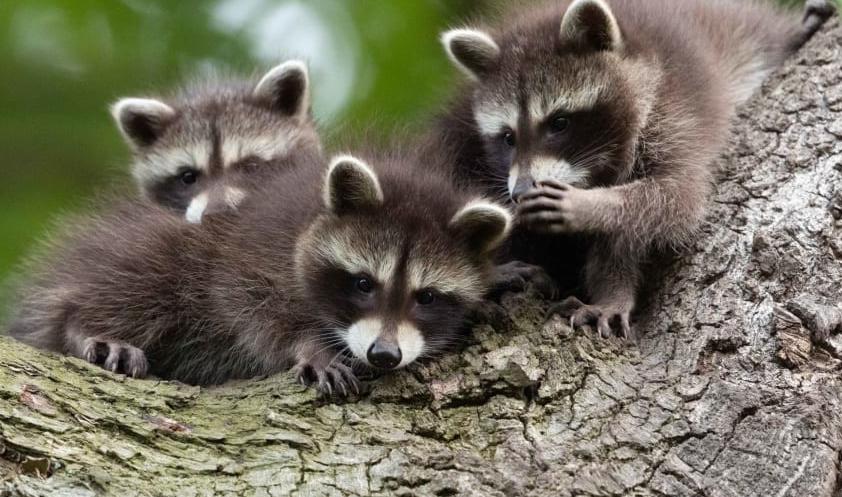 Финалисты Comedy Wildlife Photo Awards 2021