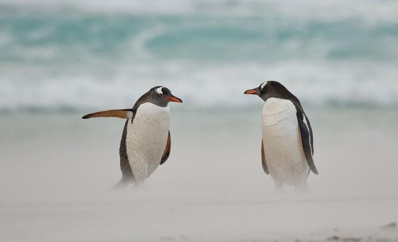пингвины смешная фотка