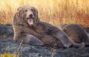 смешной медведь фото